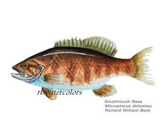 art for him Smallmouth Bass Fish  PRINT  8x10 wall decor  outdoors art man cave room den office study decor sportsman sportsmen