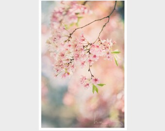 cherry blossom photograph nature art spring blooms pink shabby chic decor pastel decor nature photograph spring in boston new england