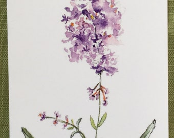 Watercolor Butterfly Bush Note Card