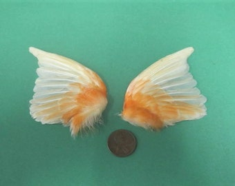 Pair Orange Canary Fanned Dried Birds Wings Feathers Art Craft Taxidermy Shipping Included