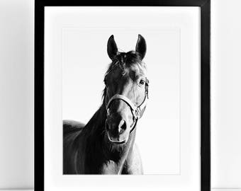 Horse Portrait in Black and White, Equestrian Art, Equine Home Decor, Physical Print