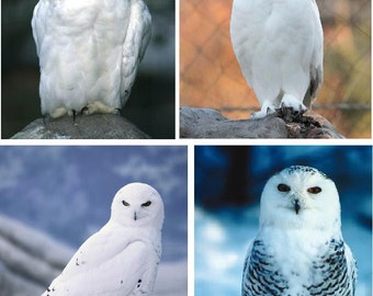 Lot Of 4 White Snow Owls Fabric Panel Quilt Squares