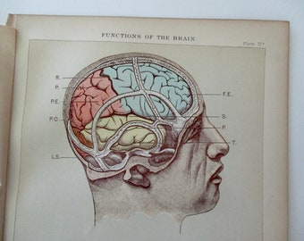 original page - 1900s color MEDICAL CHART from antique medical book - functions of the brain