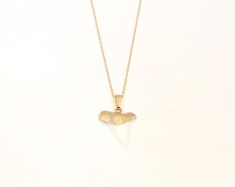 Necklace - white shark tooth necklce