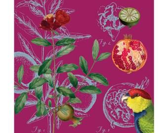 Pomegranate no. 1 limited edition giclée print (2/50)