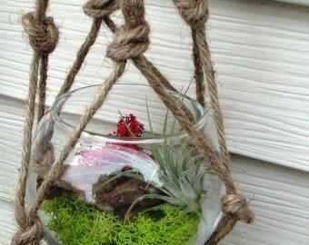 Moss Terrarium / Glass Globe / Macrame / Airplants