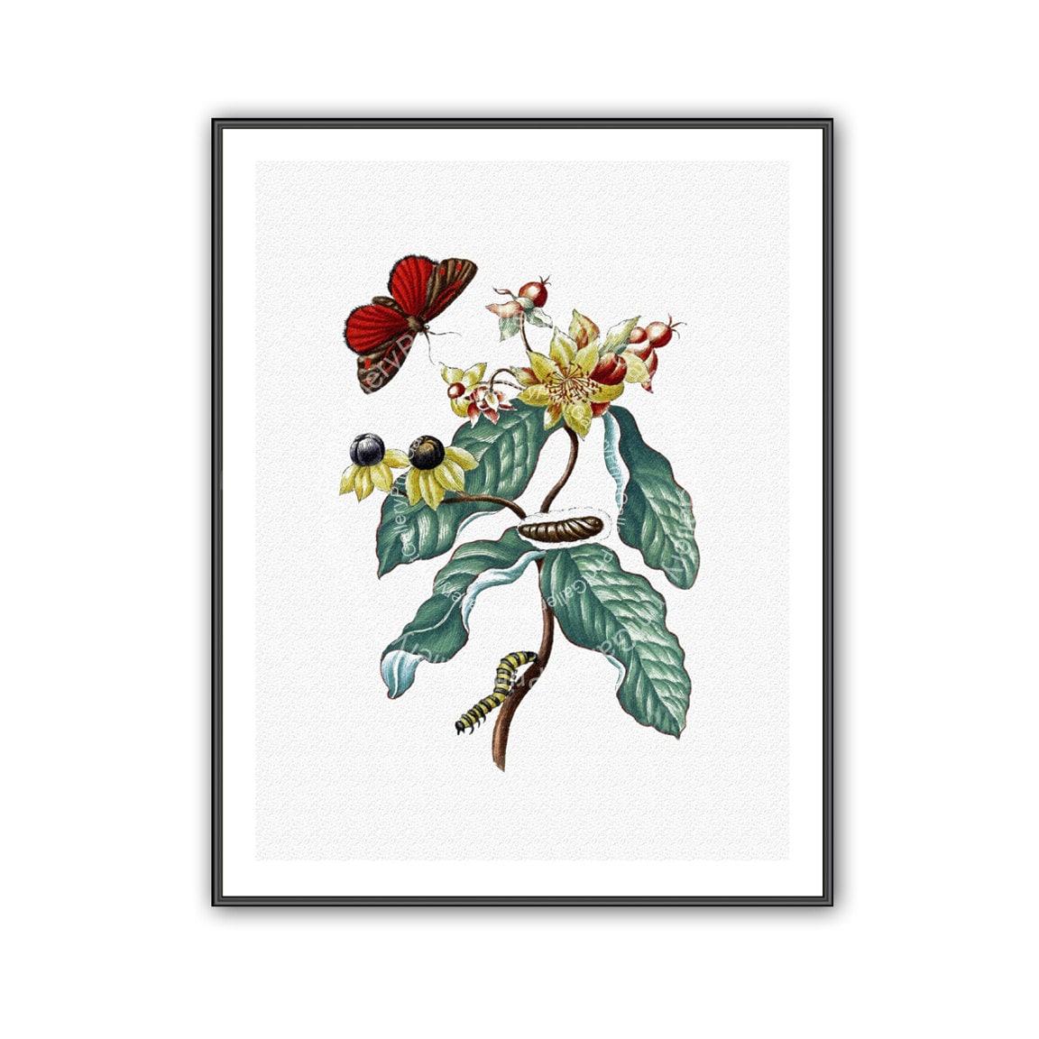 Schmetterling botanischen Print Antique Naturkunde Buch Platte
