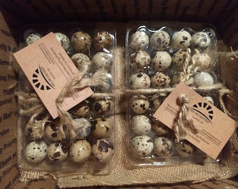 2 Dozen Healthy Nutritious Quail Eggs! (non medicated and all natural!) Beautifully packaged!