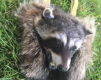 Full Mask Raccoon Sporran
