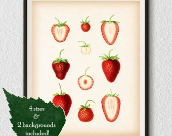 Food print, Kitchen prints, Kitchen wall art, Berry art, 8x10 print, 11x14 print, A3, A4, Printable downloads, Instant print vintage, #59