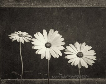 Sepia Flower Photography, Farmhouse Style Decor, Neutral Wall Art, Still Life, Rustic Art Print | 'Three Flowers'