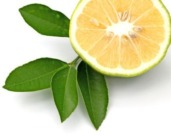 Bergamot 100 % Pure Essential Oil