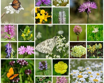 Wildflower seeds - Special Meadow Mix - 2g