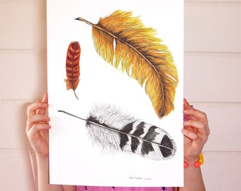 Feathers Print / Feather Poster / Nursery Print / Kids Wall Art / Feather Illustration / A4 A3 / Birds / Feathers / Bird Illustration