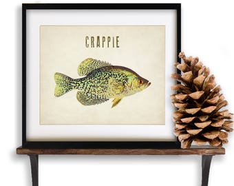 Fish Print, Crappie Art, Freshwater Fish Art, Crappie Poster, Fishing Poster, Gifts for Fisherman Man Cave #vi890