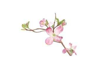 Print- Dogwood 4x6 Print Flower Wall Art Spring Watercolor Colored Pencil Garden Pink Beautiful Pretty Summer
