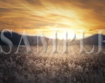 Sunset field digital backdrop