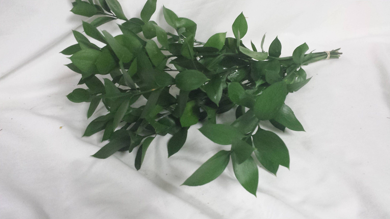 Israeli Ruscus Fresh Greenery Bulk
