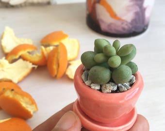 Tiny succulent planter pots, PINK or POLKA-DOT baby succulent/cactus pot flower pot with saucer