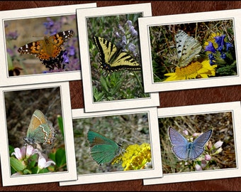 6 Butterfly Photo Note Cards Set - Butterfly Photo Greeting Cards Handmade - 5x7 Butterfly Cards - Photo Greeting Cards Handmade (GP58)