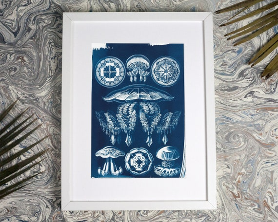 Jellyfish Anatomical Drawing Ernst Haeckel, Beach Decor, Anatomical Art, Medusa, Dorm Wall Art, Nautical Decor, Nature Inspired Art, Sealife