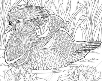 Mandarin duck. 2 Coloring Pages. Animal coloring book pages for Adults. Instant Download Print