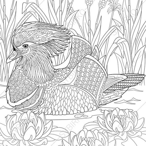 Mandarin Duck 2 Coloring Pages Animal Book