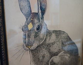 Framed illustration of a Hare in ink