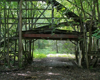 Abandoned Roller Coaster Walkway in Woods Photo Print