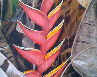 Upright Heliconia