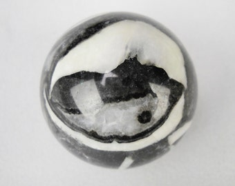 "1.5"" fossil clam gemstone spheres silver and midnight grey"