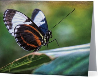 Blue Sapho Butterfly - blank note card, Gifts for nature lovers, Gifts for her, gifts for mom, butterfly cards