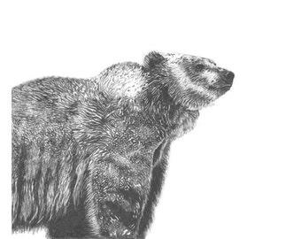 Wildlife Snapshot Grizzly Bear