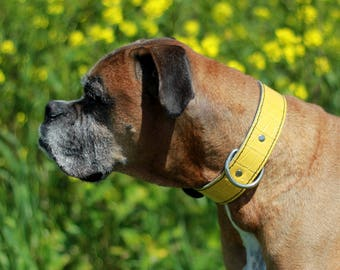 Yellow Leather Dog Collar - Yellow Embossed Leather Collar -Rad N Bad Collars - Handmade  Yellow Dog Collar - Leather Dog Collar
