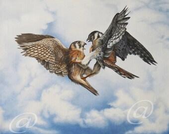original, oil, painting, Kestrel, fine art, canvas, bird, nature, realistic, wildlife, sky, western, falcon, Jan Brown