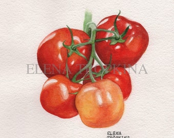 Tomatoes. Watercolor. Giclee