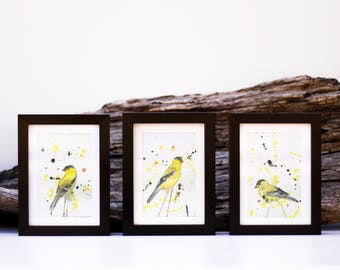 Pack of 3 American goldfinch