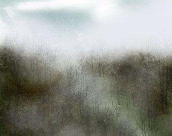 Foggy Wild
