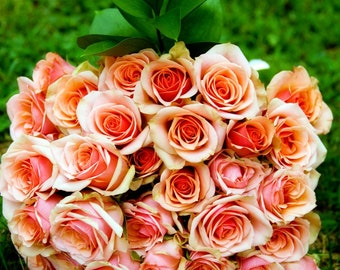 Pink Roses Photography Download