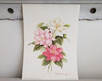 Vintage Floral Camillias Print by Stephen Mullins