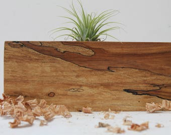 Reclaimed Spalted Maple Air Plant Holder