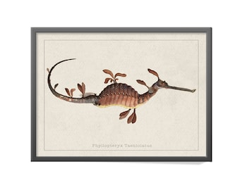 Phyllopteryx Art Print - Vintage Common Seadragon Print - Phyllopteryx taeniolatus Art Print - Sketchbook of Fishes Print - William Gould
