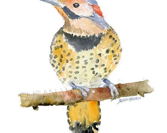 Northern Flicker Watercolor Painting - 8 x 10 Giclee Print - Watercolor Bird Art - 8.5 x 11