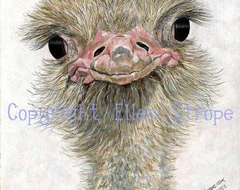CARD, ostrich, ostrich decor, bird decor, note cards, Ellen Strope, castteam, home decor, ostrich cards