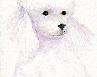 White Poodle painting Original 5 x 7 poodle art, poodle wall art, dog painting, poodle watecolor poodle, watercolor painting, pet painting