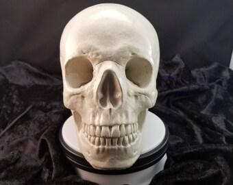 Life size realistic white concrete glazed skull
