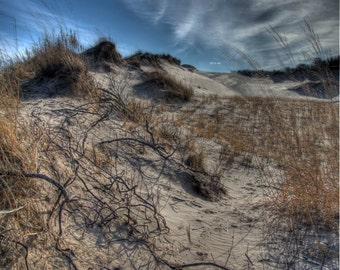 Sleeping Bear Sand Dune Photography, Leelanau Art, Tangled Roots, Michigan Photo