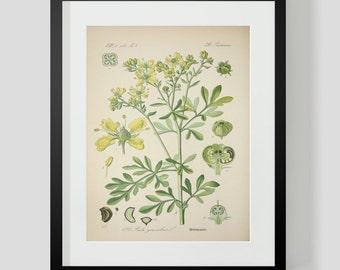 Botanical Print Plate 325