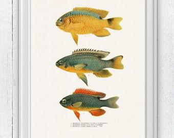 Vintage  fishes no.02 Wall decor poster- Gloden color Sea fish collage- sea life print SAS088