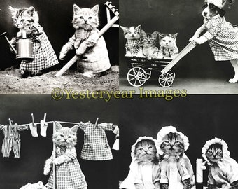 Vintage Harry Frees (1879-1953) Funny CAT PHOTOS (A) - Digital Images Collage Sheets - Instant Download - 3 PNG Files 4x4 - 2x2 - 1x1